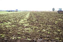 土壌改良用として最適|農業用炭